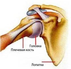 osteoarthrosis, akivel kapcsolatba lépni - felsomatraiskola.hu