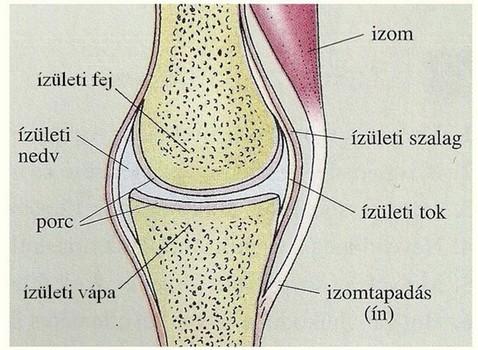 kenőcsök és tabletták térdízület bursitisére ízületi fájdalom angol fordítás