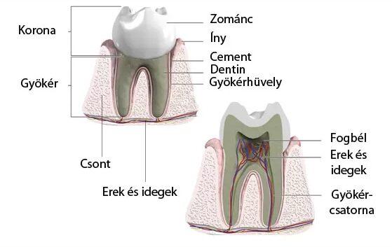 fájdalomcsillapító fogfájás degeneratív ízületi bemutató