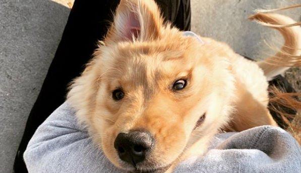 közös kutya előkészítése