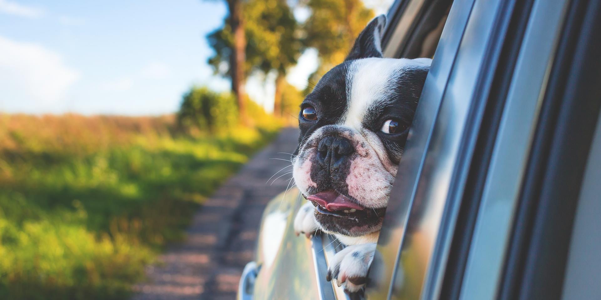 közös kutya előkészítése miért fáj a könyökízületek a kezelés