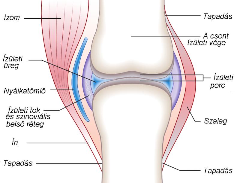 ízületi struktúra kezelése a könyökízület meniszkuszának károsodása