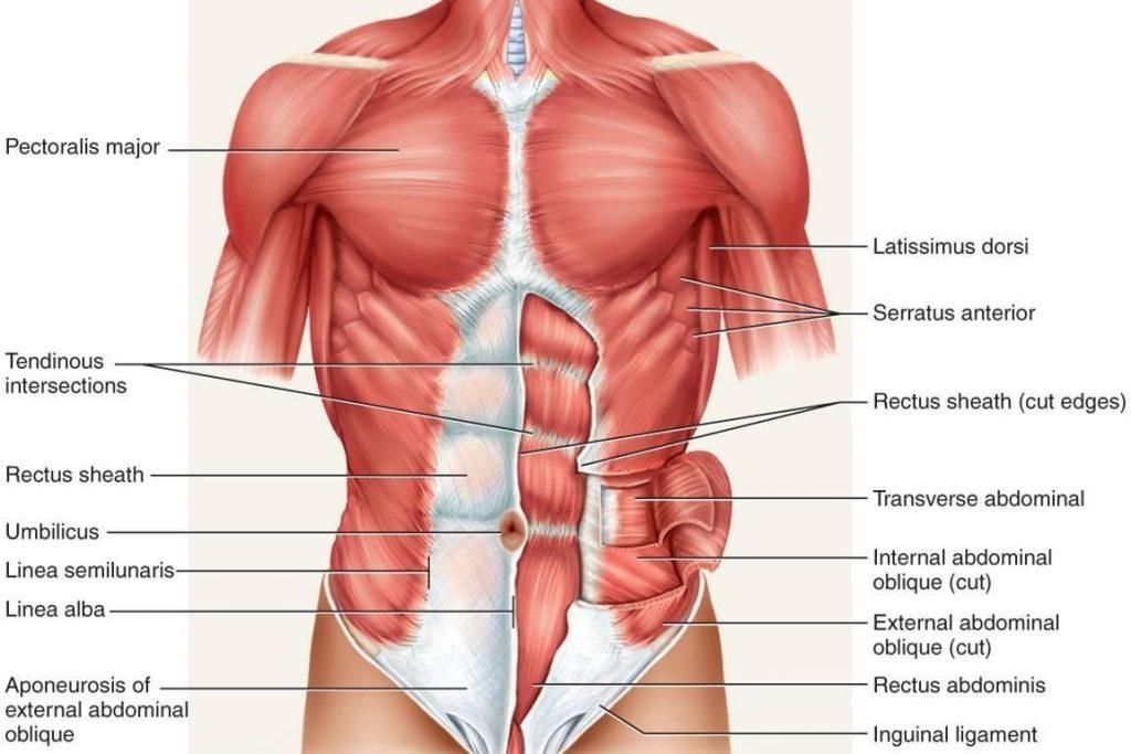 térdízület osteochondrosis gyógyszerei a parotid ízület kezelése