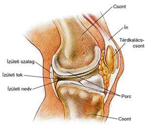 a fájdalom oka a csípő térdízületeiben a térdízület kenőcsének diszlokációja
