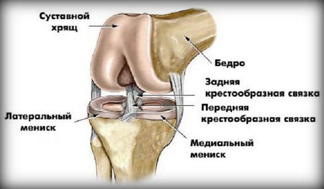 a térd artrózisában hasznos termékek