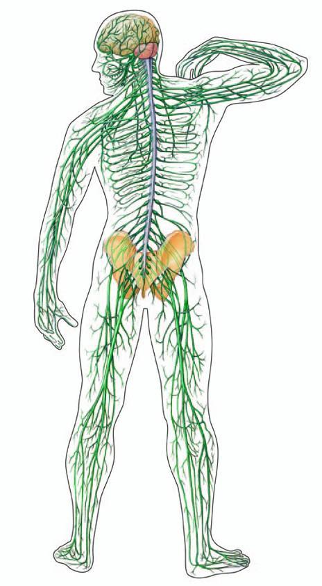 medence fájó ízületi kezelés a térd ízületi gyulladásainak listája