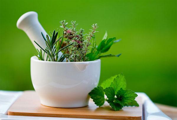 gyógynövények gyógyító ízületek