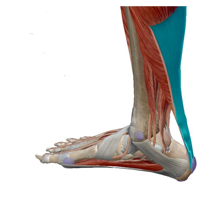 foci boka kezelés sérülés után ízületi csontritkulás