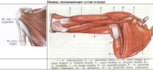 Jóga a csípő ízületek coxarthrosisára