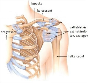 a vállízület fájdalmainak okai sérülés után