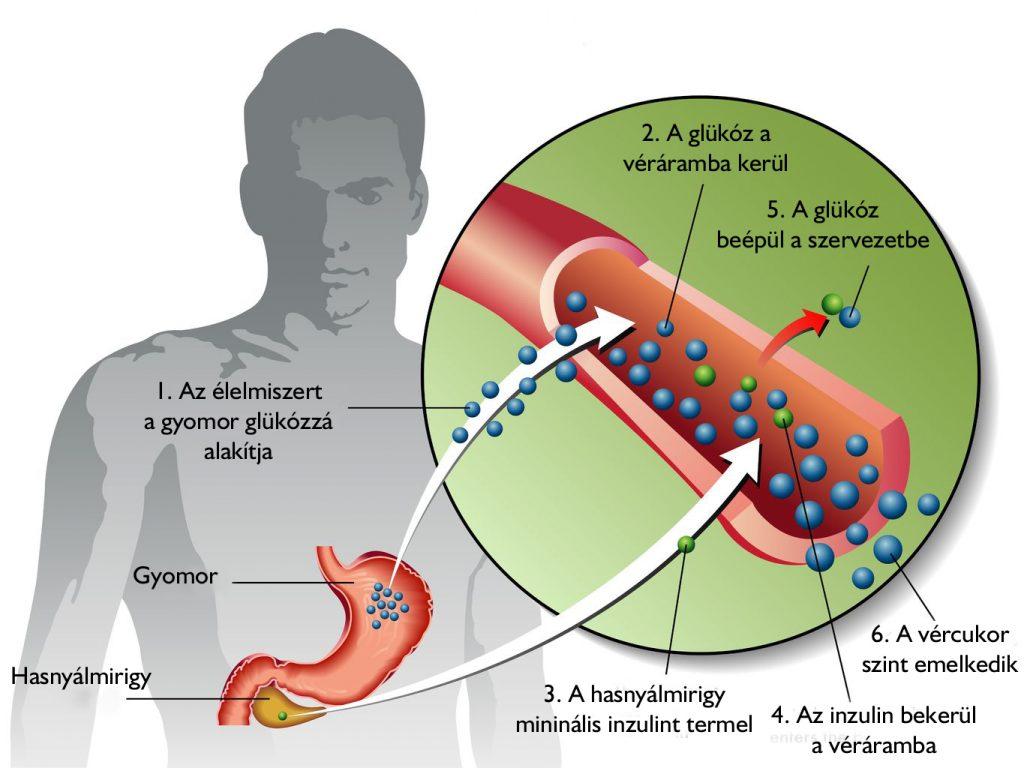 Ez történik a szervezetben, ha kialakul a cukorbetegség - HáziPatika
