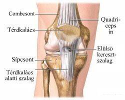 Artroszkópos térdműtét, térd artroszkópia, térdműtét