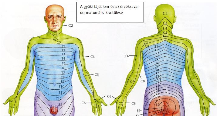 lüktető fájdalom a gerincben fájdalomcsillapító gyógyszerek a gyertyák ízületeiben