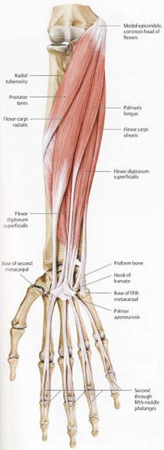 brachialis artrosis és ulnar kezelése gyógytorna a térd osteoarthritisének kezelésében