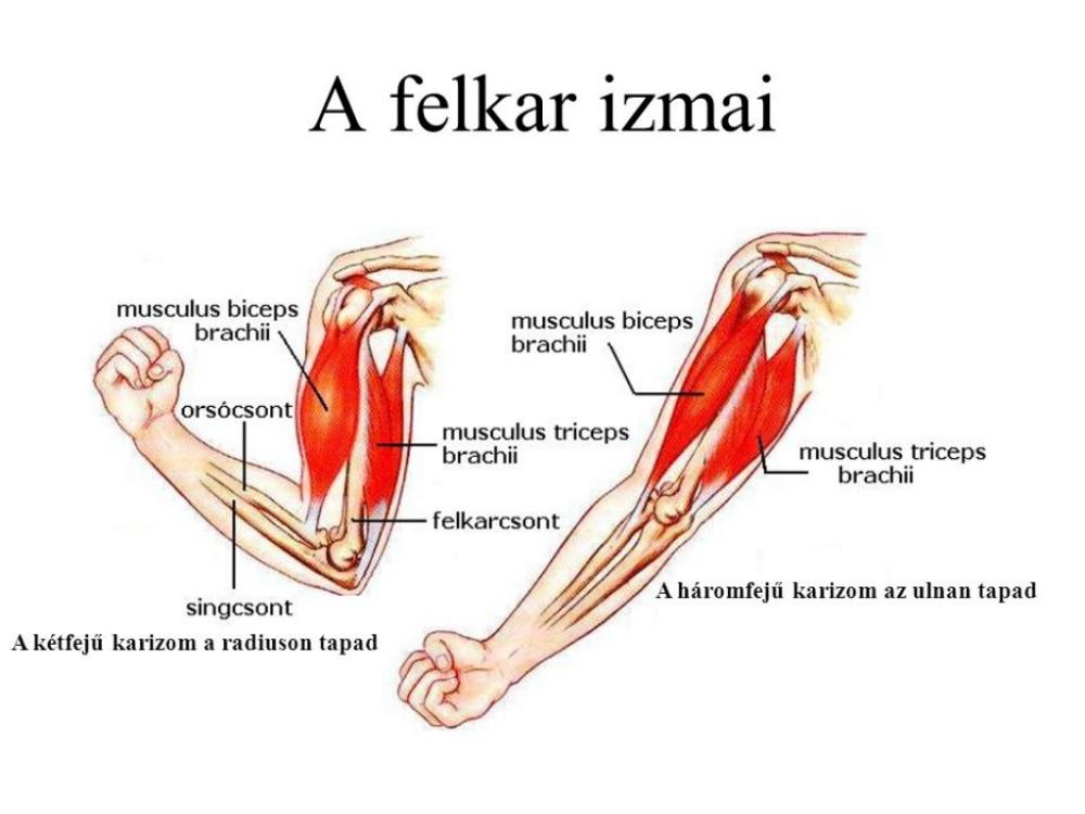 hüvelykujj alatti fájdalom vállfájdalom jellege