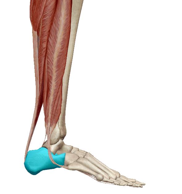 a bokaízületek lábainak fájdalma okoz közös kezelés don gyógyszer