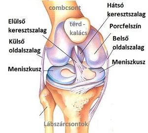 fájó térdízület belső oldalán torna térdízületi tünetek és kezelés