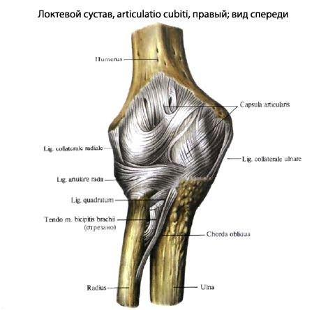 a lábak ízületei folyamatosan fájnak, mit kell tenni