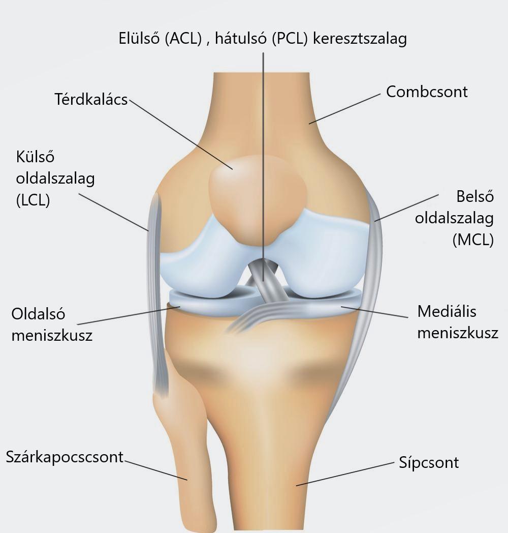hogyan lehet enyhíteni a térdízület duzzanatát és fájdalmát ízületek térd fáj kezelést
