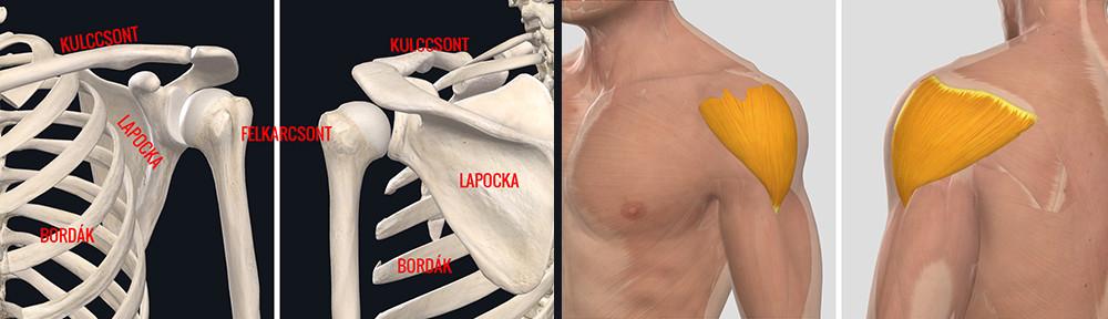 Kenőcsök a vállízület osteoarthrosisához