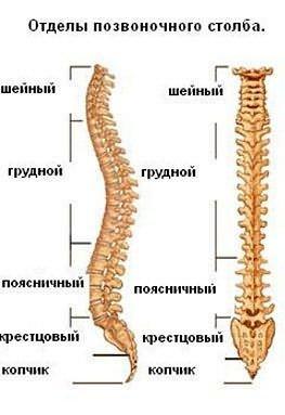 a gerinc ívelt ízületeinek artrózisa