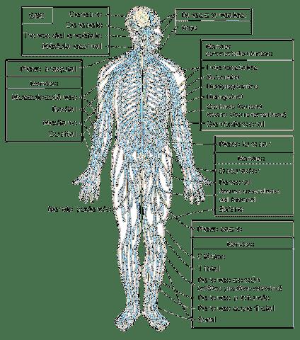 turmalin ízületi fájdalmak esetén