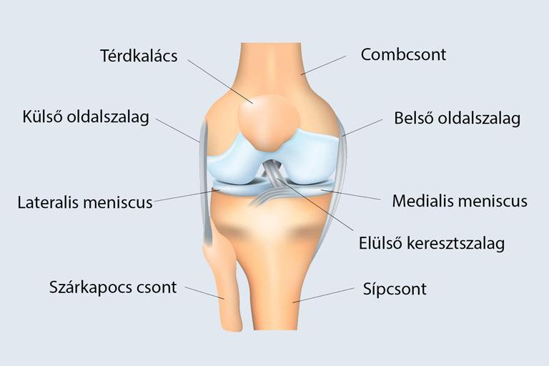 térd sérülések és kezelésük