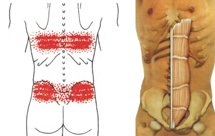 a térdízület hátsó kereszteződése bursitis térdízület betegség