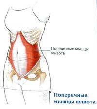 A térd hemarthrosisának teljes áttekintése: tünetek és kezelés - Csípő